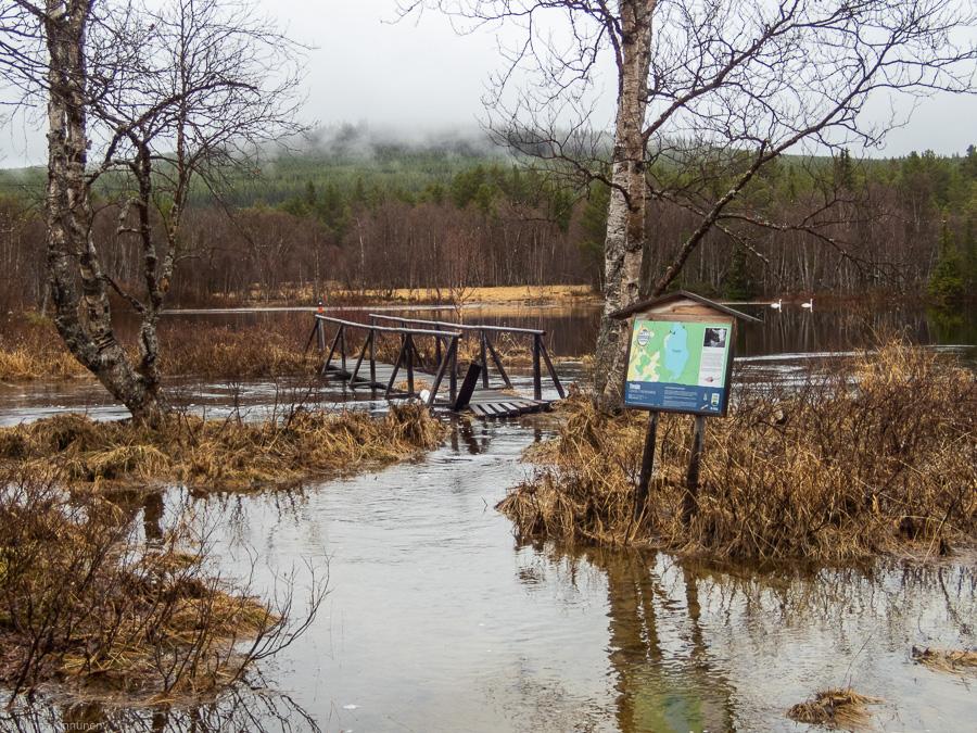 The 50 year flood