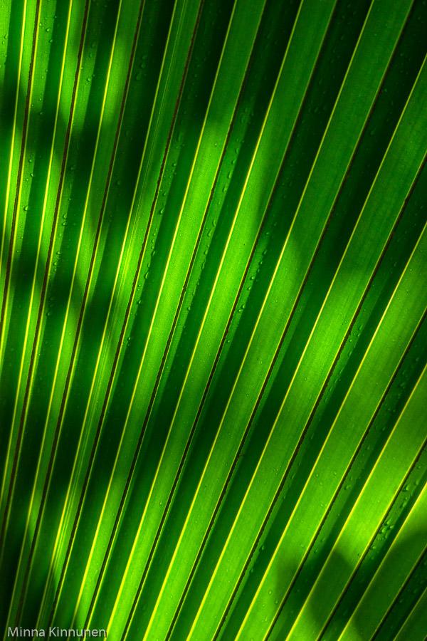 Ljuset leker på palmen