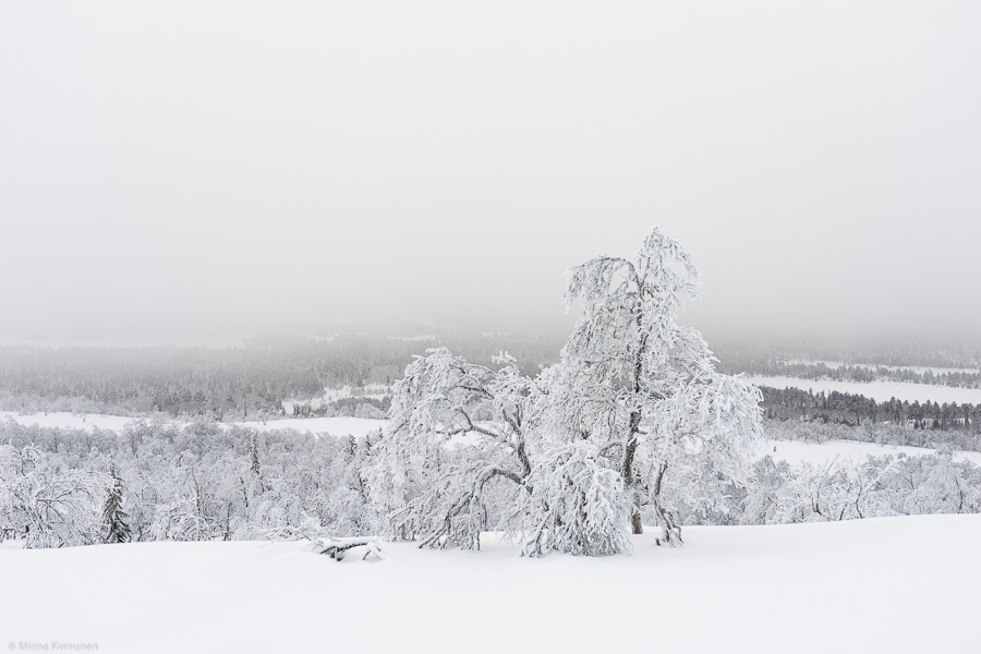 En svartvit färgbild