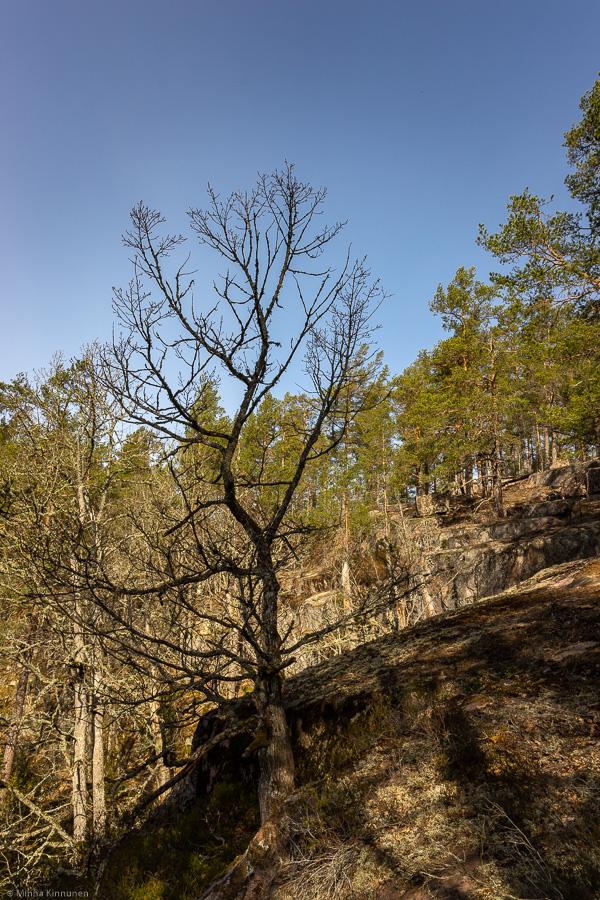 Hulebo naturreservat