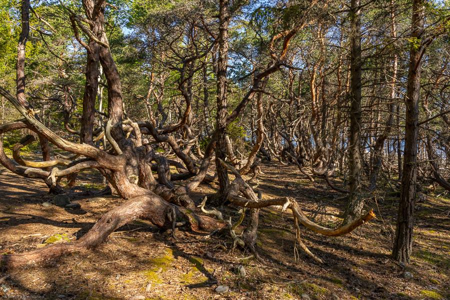 Förtrollad skog i hårt ljus