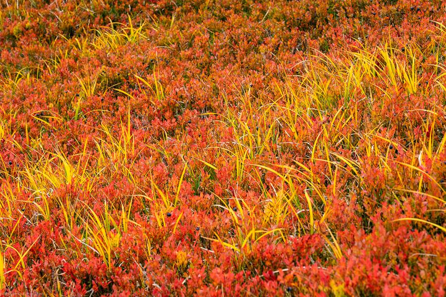 Höstfärger på marken