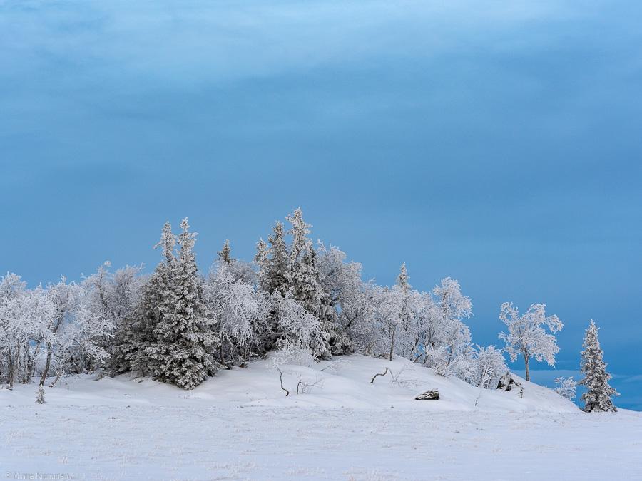 Frostiga träd på Platån