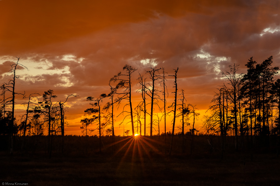 Solnedgång i Store Mosse nationalpark