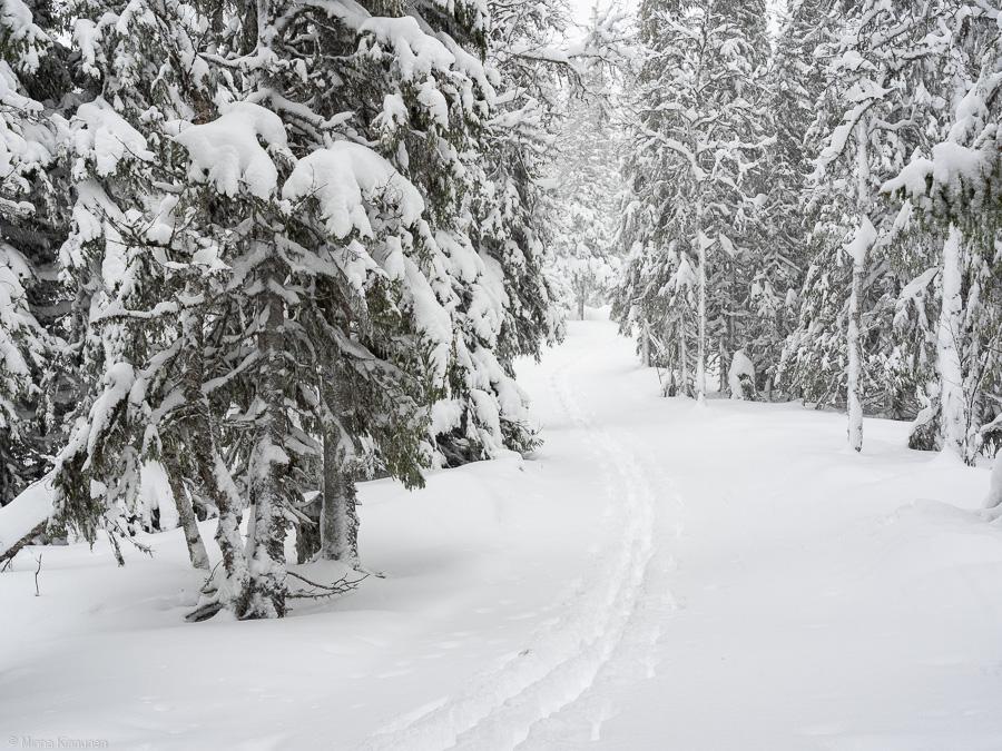 Nu har det börjat snöa igen